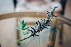 Delphinium flower Royalty Free Stock Image