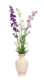 Delphinium flowers Royalty Free Stock Photos