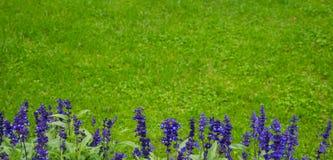 Delphinium flowers background Stock Images