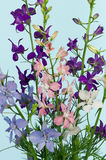 Delphinium flowers. Bouquet of beautiful colorful delphinium flowers on blue background Royalty Free Stock Images
