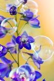 Delphinium flowers Stock Photos