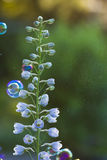 Delphinium flowers Royalty Free Stock Images
