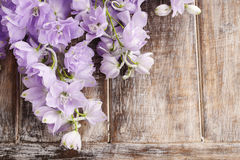 Delphinium flowers Stock Images