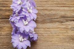 Delphinium flowers Royalty Free Stock Photography