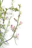 Delphinium flowers on light background Stock Images