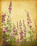 Delphinium flowers. Old paper background with delphinium flowers royalty free stock photos