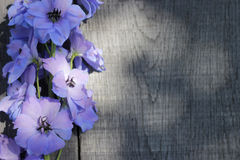 Delphinium - larkspur on wooden planks Royalty Free Stock Images