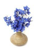 Delphinium Royalty Free Stock Photo
