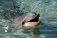 Delphinlächeln Stockbild