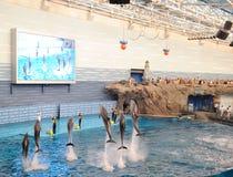 Delphinleistung stockbilder