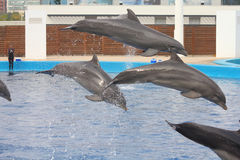 Delphinleistung Lizenzfreie Stockfotos