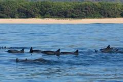 Delphinparty lizenzfreies stockfoto