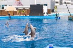Delphinshow Lizenzfreies Stockfoto
