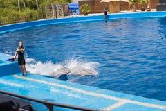 Delphinshow Stockfotografie