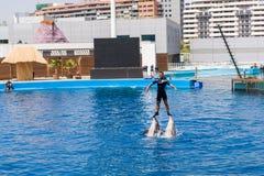 Delphinshow Lizenzfreie Stockfotos