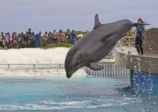 Delphinshow Lizenzfreie Stockbilder