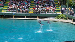 Delphinshow stockfotos