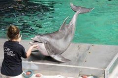Delphinshow Stockbilder