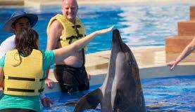 Delphinshow bei Dolphinaris Stockbilder