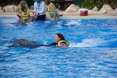 Delphinshow bei Dolphinaris Stockbild