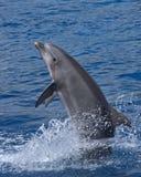 Delphinstellung Stockfoto