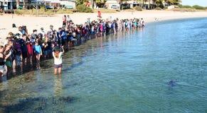 Delphintreffenerfahrung Affe Mia Haifisch-Bucht Sein gelegen auf Wellington-Straße und war im November 2012 geöffnet Lizenzfreie Stockfotografie