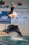 Delphinzeigen im Dolphinarium Stockbild