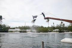 Delphinzeigung im Theater des Meeres bei Islamorada Stockfotos