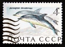 delphis Court-rostrés de Delphinus de dauphin commun, serie de Marine Mammals, vers 1971 Images stock