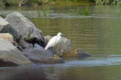 Delta bird Stock Image