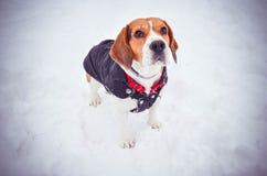 Delta Bucarest de Vacaresti d'hiver de briquet de chien Photos libres de droits