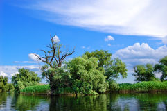 Delta Channel. A watter channel in the Danube Delta Stock Photos