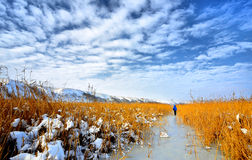Delta congelato Fotografie Stock