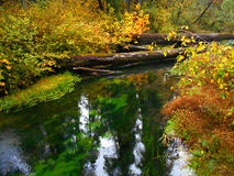 Delta Creek in the Off Season. Autumn at Delta Creek in the old growth forest at Delta Campground - near Blue River, OR royalty free stock photos