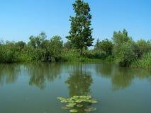 Delta of Danube. Delta of the river Danube. Ukraine royalty free stock photo