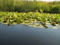 Delta de Danúbio Imagens de Stock