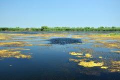 Delta de Danúbio Canal de água, lago e pântano, Romênia fotografia de stock royalty free
