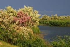Delta de Danube Photo stock