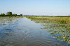 Delta de Danube River Fotografia de Stock Royalty Free