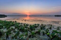 Delta de Danube, Roumanie Images stock