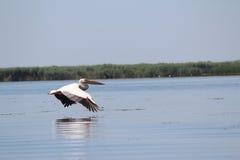 Delta de Danube, Roumanie Photos stock
