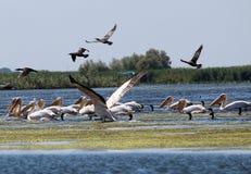 Delta de Danube, Roumanie Photographie stock