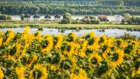 Delta de Danube - voyage vers la Roumanie images libres de droits