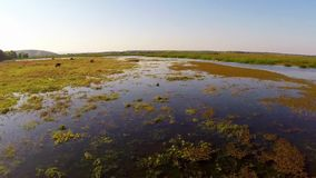 Delta de Danubio en el movimiento almacen de metraje de vídeo