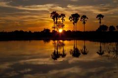 Delta de Okavango foto de stock