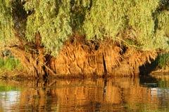 Delta del Danubio immagini stock