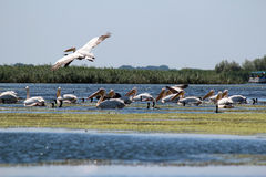 Delta del Danubio, Romania fotografia stock