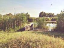 Delta di Danubio immagine stock libera da diritti