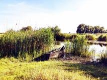 Delta di Danubio immagini stock