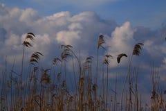 Delta di Danubio Fotografia Stock Libera da Diritti